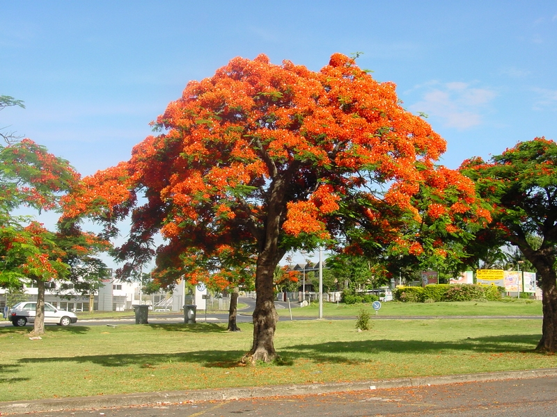 Notre arbre de Noël