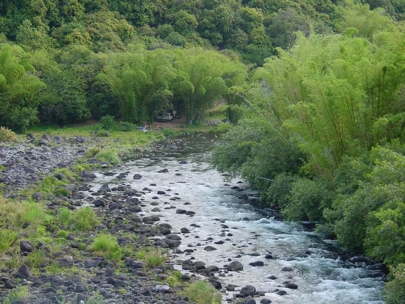 Sous les bambous